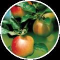 culturi/pomi-fructiferi/