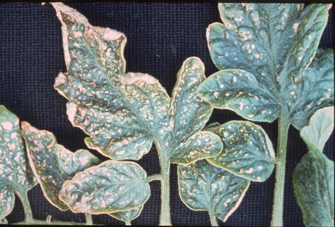 semnele carenței potasiu plante